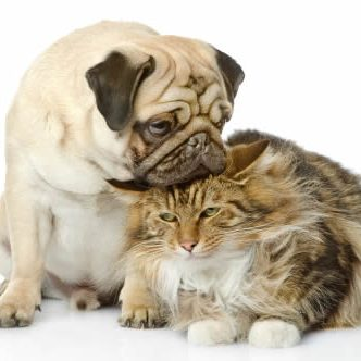 Pet Friendly Apartments dog_and_cat